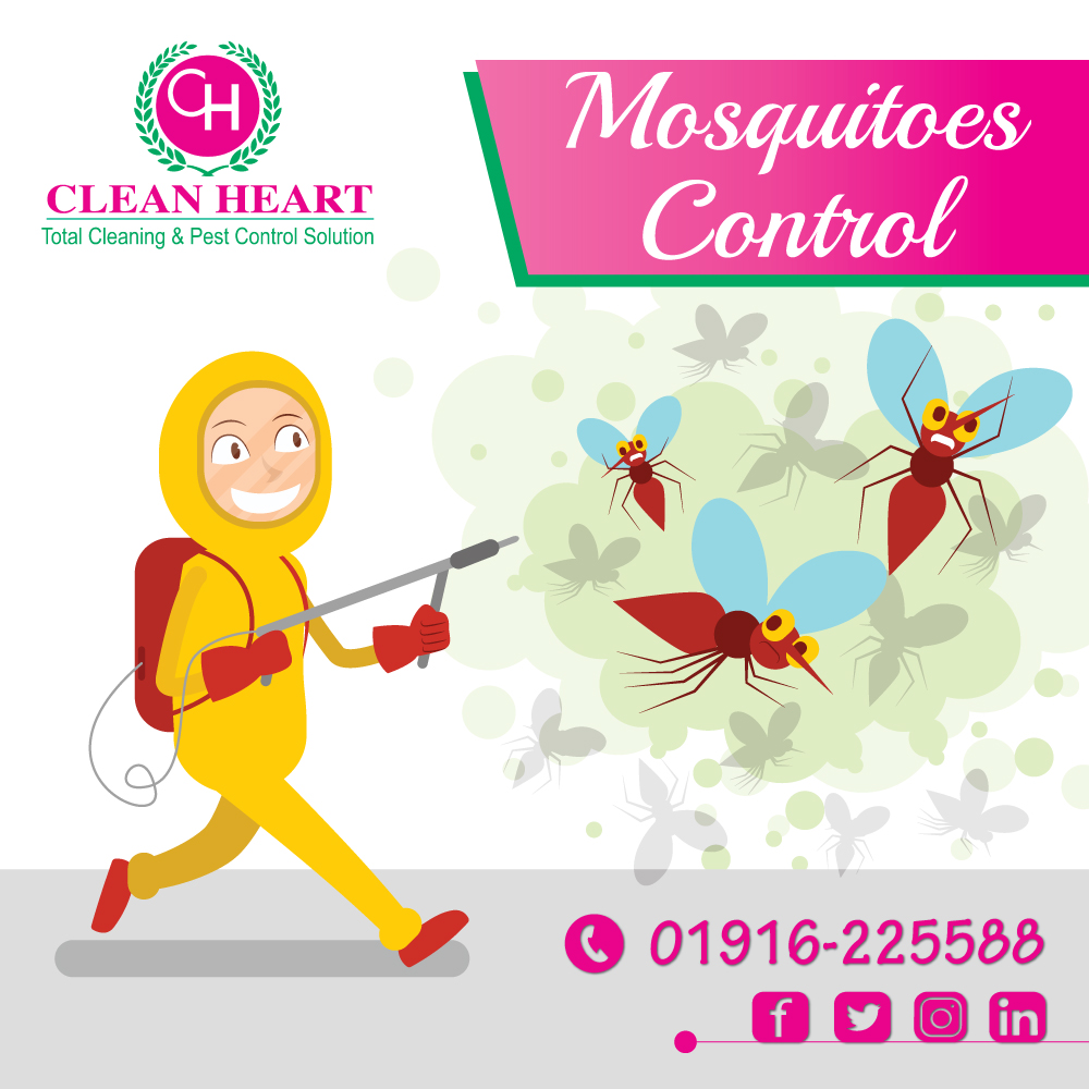 Mosquitoes control service